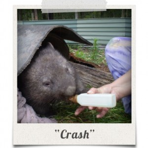 polaroid_crash