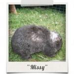 polaroid_missy