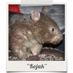 polaroid_kojak