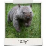 polaroid_tilly